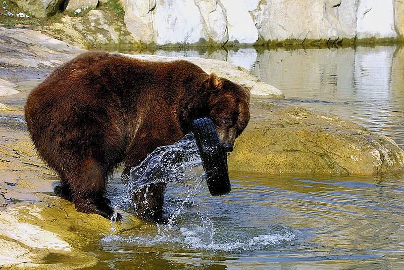 Böllerverbot im und um den Tierpark Olderdissen | Radio